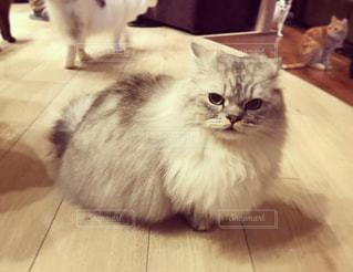 猫の写真・画像素材[309341]