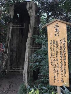 木の写真・画像素材[267385]
