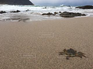海の写真・画像素材[337721]