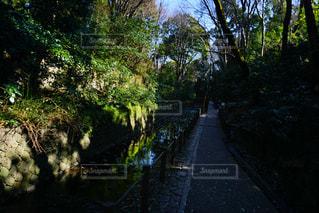庭の写真・画像素材[348400]