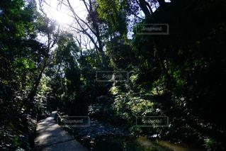 庭の写真・画像素材[348401]