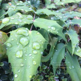 水滴の写真・画像素材[256976]