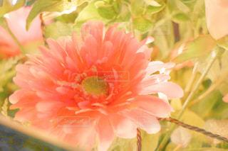 花の写真・画像素材[264093]