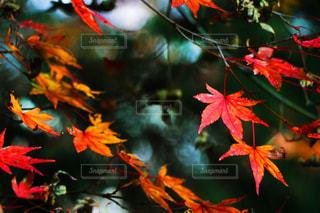 自然の写真・画像素材[271123]