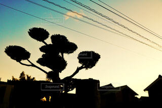 夕陽に黄昏れる樹木 - No.963268