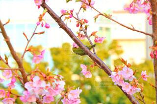 春の訪れの写真・画像素材[1023971]