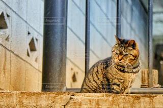 野良猫1 - No.1023976