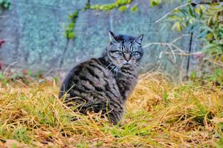野良猫2の写真・画像素材[1023977]