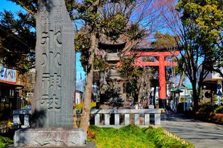 大宮氷川神社の写真・画像素材[1023983]