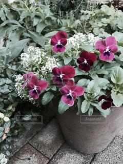 花の写真・画像素材[257363]