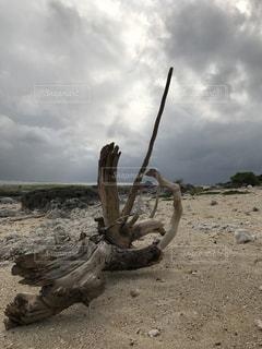 流木のある風景の写真・画像素材[1023180]