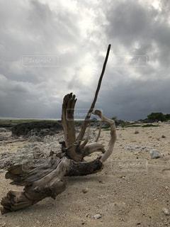 石垣島の流木の写真・画像素材[1023189]
