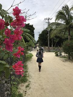 竹富島散策の写真・画像素材[1023191]