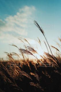 自然の写真・画像素材[257389]