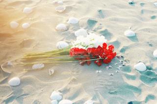 海の写真・画像素材[257392]