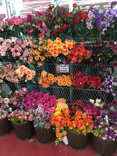 花の写真・画像素材[299496]