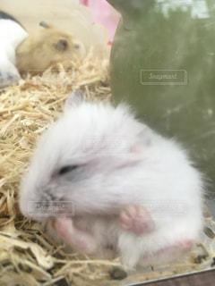 動物の写真・画像素材[327491]