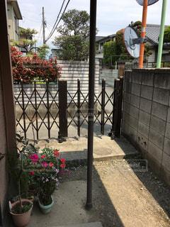 No.457672 花