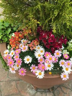 花の写真・画像素材[457870]