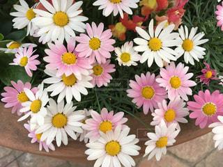花の写真・画像素材[457871]