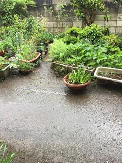 雨 - No.478587