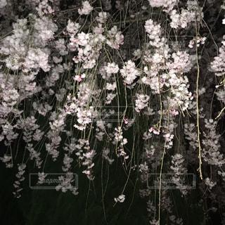春の写真・画像素材[1100098]