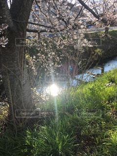 川に太陽が反射しましたの写真・画像素材[3044732]