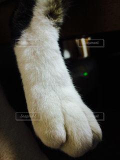 猫 - No.257484