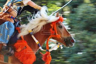 馬の写真・画像素材[259877]