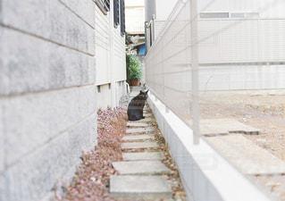 猫の写真・画像素材[262824]
