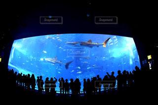 魚の写真・画像素材[275613]
