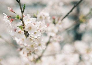 花のクローズアップの写真・画像素材[2131765]