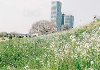 野原の茂みのグループの写真・画像素材[2131768]
