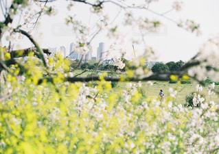野原の黄色い花の写真・画像素材[2131779]