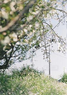 木のクローズアップの写真・画像素材[2131780]