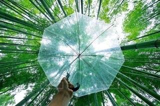 自然の写真・画像素材[5927]