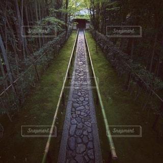 自然の写真・画像素材[5912]