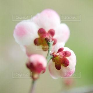 自然の写真・画像素材[5905]