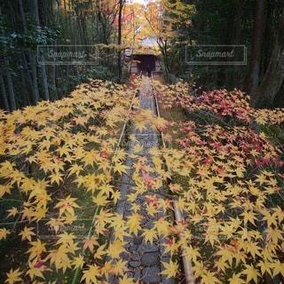 自然の写真・画像素材[5893]