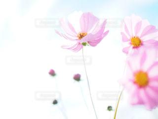 自然の写真・画像素材[257604]