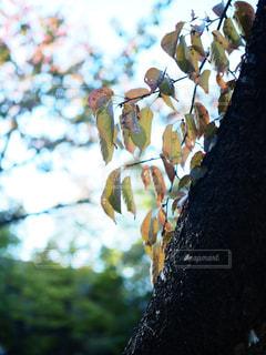 自然の写真・画像素材[257609]