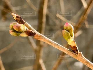 No.374161 桜