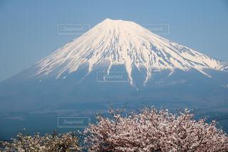 No.464562 桜