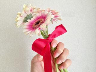 ガーベラの花束と手の写真・画像素材[301364]