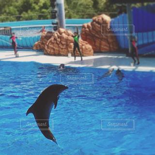 水の中を泳ぐ鳥 - No.712290
