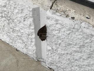 我が家に止まってた、よく見ると葉っぱ…に見える蛾でした! - No.1001140