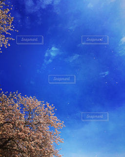 空に舞う桜の花びら🌸 - No.1068696