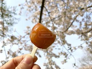 桜の花とお団子の写真・画像素材[1100338]