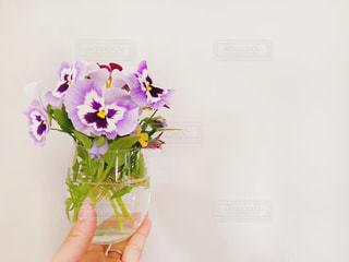 パンジーの花とグラスと女性の手の写真・画像素材[1175031]