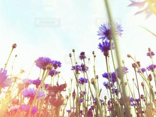 紫とブルーの花をローアングルで。の写真・画像素材[1177446]